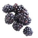 Handful of Blackberries